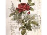 Botanical Rose  61 x 86cm