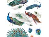 Peacock Dreams  60 x 83cm