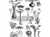 Fungi Forest   61 x 89cm