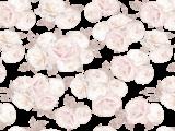 Jardin de Roses 89x59cm