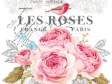 Les Roses 28x37cm