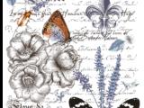 Papillon 58x86cm