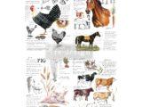 Farm Life 61x89cm