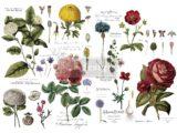 Vintage Botanical 121x89cm