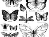 Tampon IOD Butterflies