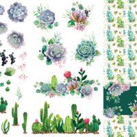 Cacti & Succulents Dixie Belle