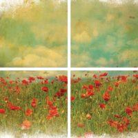 Field of Flowers Dixie Belle